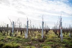 Wijnranken langs de Route des grand crus (Foto: Briek Verdoodt)